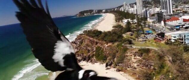Drone flying over urban area - UAV Training Australia